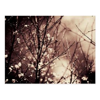 Cartão Postal Artigo escuro da flor do abricó