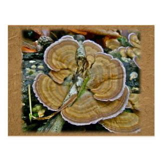 Cartão Postal Artigos de coordenação roxos do fungo de