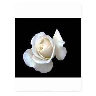 Cartão Postal Artigos de papelaria do casamento do rosa branco