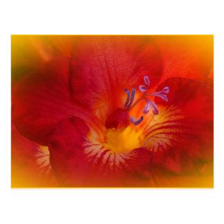 Cartão Postal Artigos vermelhos da flor do Freesia