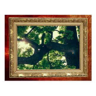 Cartão Postal Árvore Backlit verde, flora da luz solar