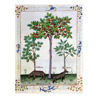 Cartão Postal Árvore da avelã Bush e de cereja