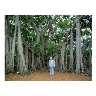 Cartão Postal Árvore de Banyan Edison & propriedade Ft Myers