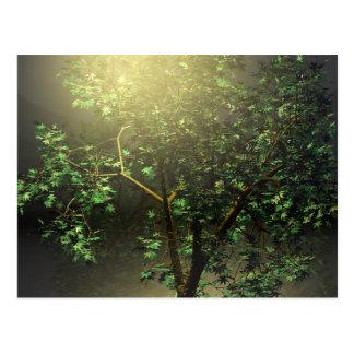 Cartão Postal árvore de bordo 3D japonês