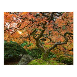 Cartão Postal Árvore de bordo nos jardins do japonês no outono