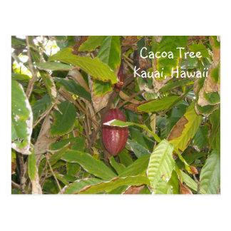 Cartão Postal Árvore de Cacoa