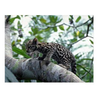 Cartão Postal árvore de escalada do Ocelot-bebê