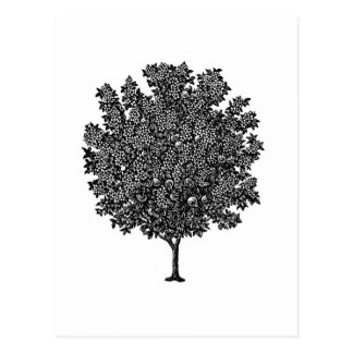 Cartão Postal Árvore de fruta