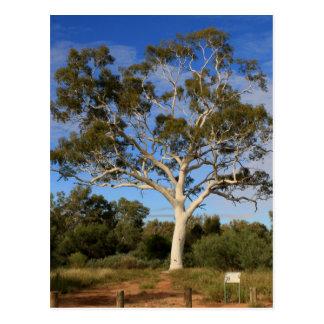 Cartão Postal Árvore de goma do fantasma, interior Austrália