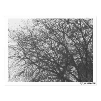Cartão postal - árvore de inverno