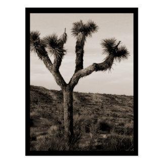 Cartão Postal Árvore de Joshua