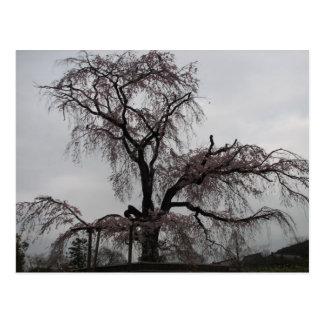 Cartão Postal Árvore de Kyoto Sakura, Japão