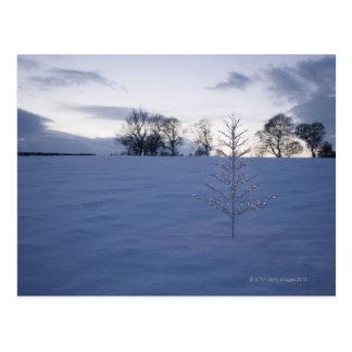 Cartão Postal Árvore de Natal