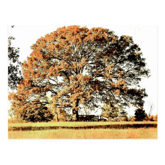 Cartão Postal Árvore de vida