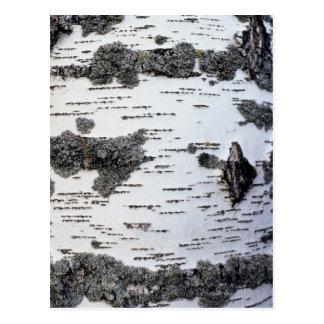 Cartão Postal Árvore de vidoeiro na floresta, detalhe, com musgo
