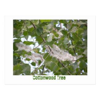 Cartão Postal Árvore do Cottonwood