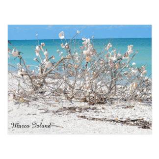 Cartão Postal Árvore do Seashell na ilha de Marco