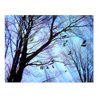 Cartão Postal Árvore dos calçados