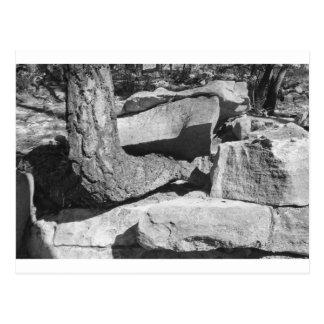 Cartão Postal árvore fora das rochas