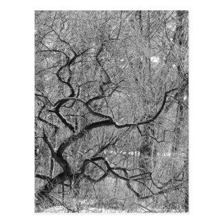Cartão Postal árvore preto e branco