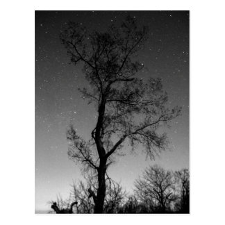 Cartão Postal Árvore preto e branco na noite
