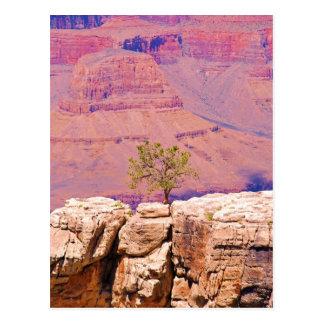 """Cartão Postal """"Árvore solitária coleção de Ridge da garganta"""""""