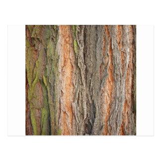 Cartão Postal árvore velha