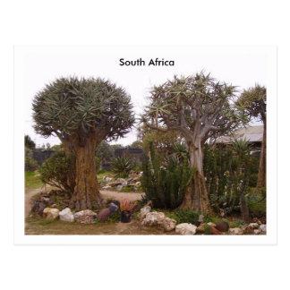 Cartão Postal Árvores