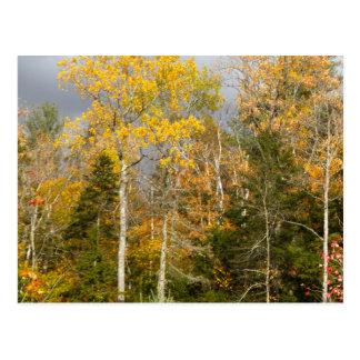 Cartão Postal Árvores amarelas em New Hampshire