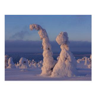 Cartão Postal Árvores cobertos de neve em Lappland