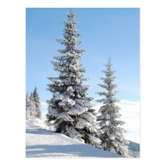Cartão Postal Árvores da cume