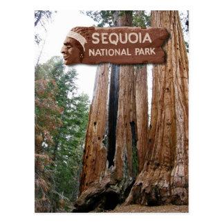 Cartão Postal Árvores da sequóia gigante, parque nacional de