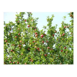 Cartão Postal Árvores de Apple