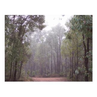 Cartão Postal Árvores de goma