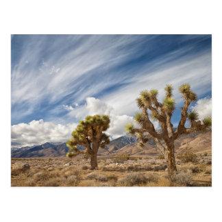 Cartão Postal Árvores de Joshua no deserto