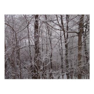 Cartão Postal Árvores de Nova Inglaterra do fosco da neve