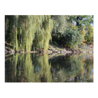 Cartão Postal Árvores de salgueiro refletidas no rio