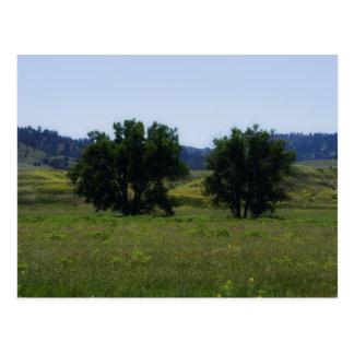 Cartão Postal Árvores do Cottonwood