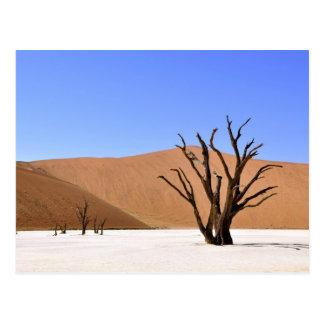 Cartão Postal Árvores do deserto