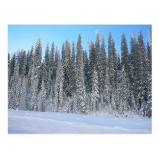 Cartão Postal Árvores do inverno