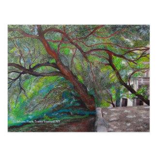 Cartão Postal Árvores do parque de Isham