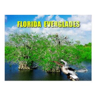 Cartão Postal Árvores dos manguezais & Anhinga, marismas de