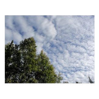 Cartão Postal Árvores e céu da manhã