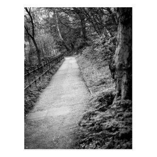 Cartão Postal Árvores em um parque