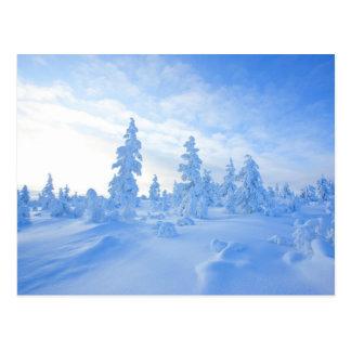 Cartão Postal árvores nevado em Lapland em Finlandia