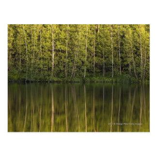 Cartão Postal Árvores refletidas na água