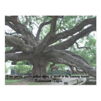 Cartão Postal As árvores são o esforço infinito da terra.     R.