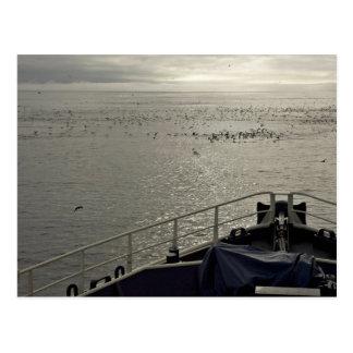 Cartão Postal As ave marinho fora de Tiglax curvam-se perto da