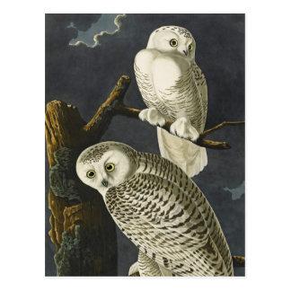 Cartão Postal As corujas nevado de Audubon