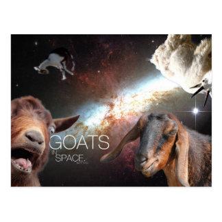 Cartão Postal ás de Goats.In.Sp
